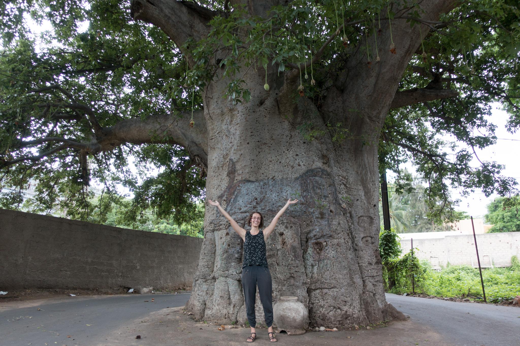 In front of a giant baobab in Dakar.